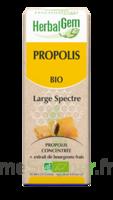 Herbalgem Propolis Large Spectre Solution Buvable Bio Fl Cpte-gttes/15ml à Le Teich